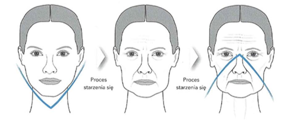 Jakie są etapy procesu starzenia